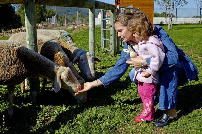 Visite à la ferme ©OT Roquefort