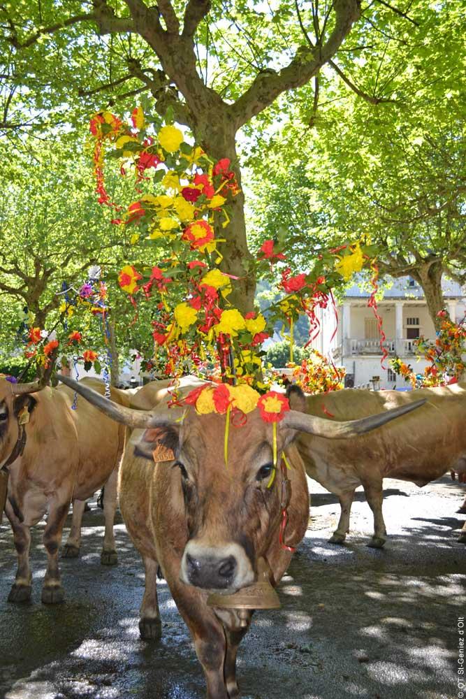 Vache, Fete de l'Estive © OT-St-Geniez