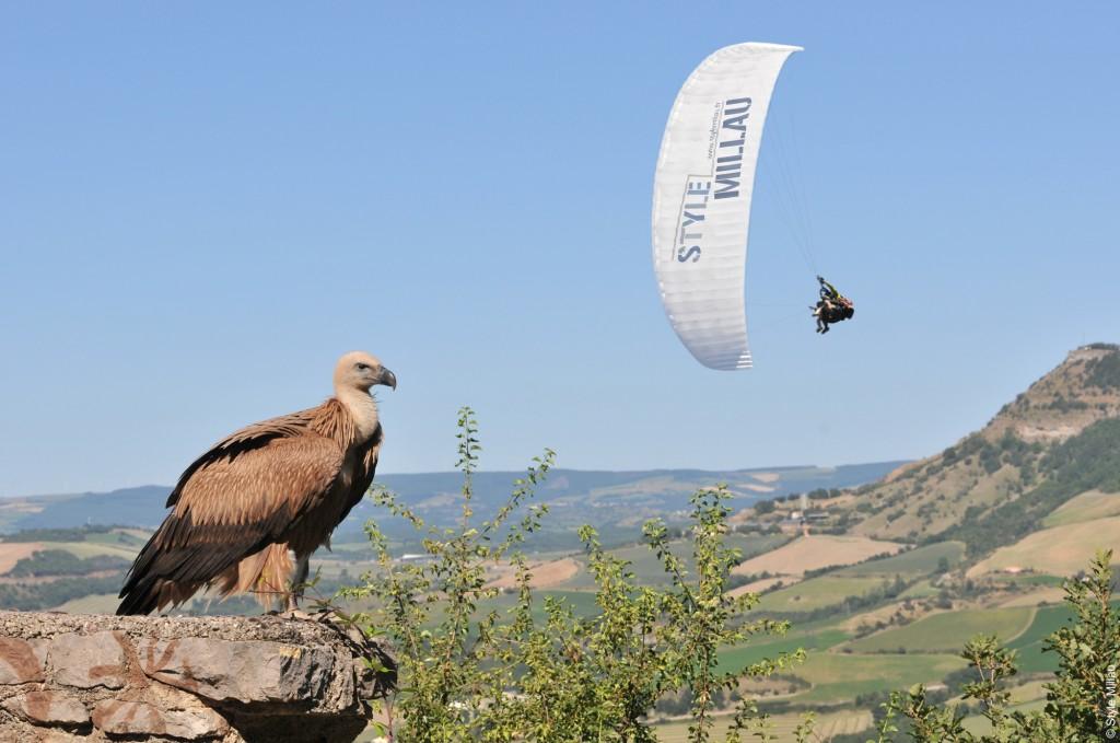 Parapente et vautour © Style Millau