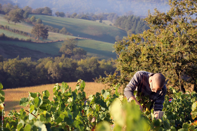 Vendanges en Aveyron © H. Bruel / Tourisme-Aveyron