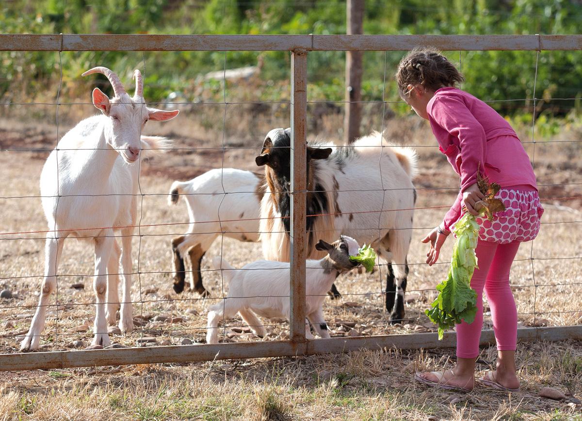 Visite à la ferme © Tourisme Aveyron