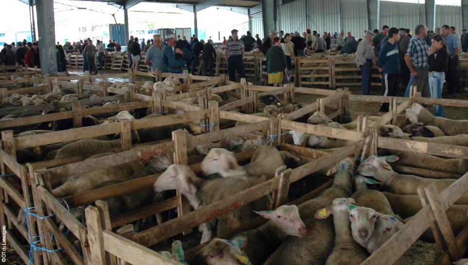 Marché aux bestiaux de Laissac © OT du Laissagais
