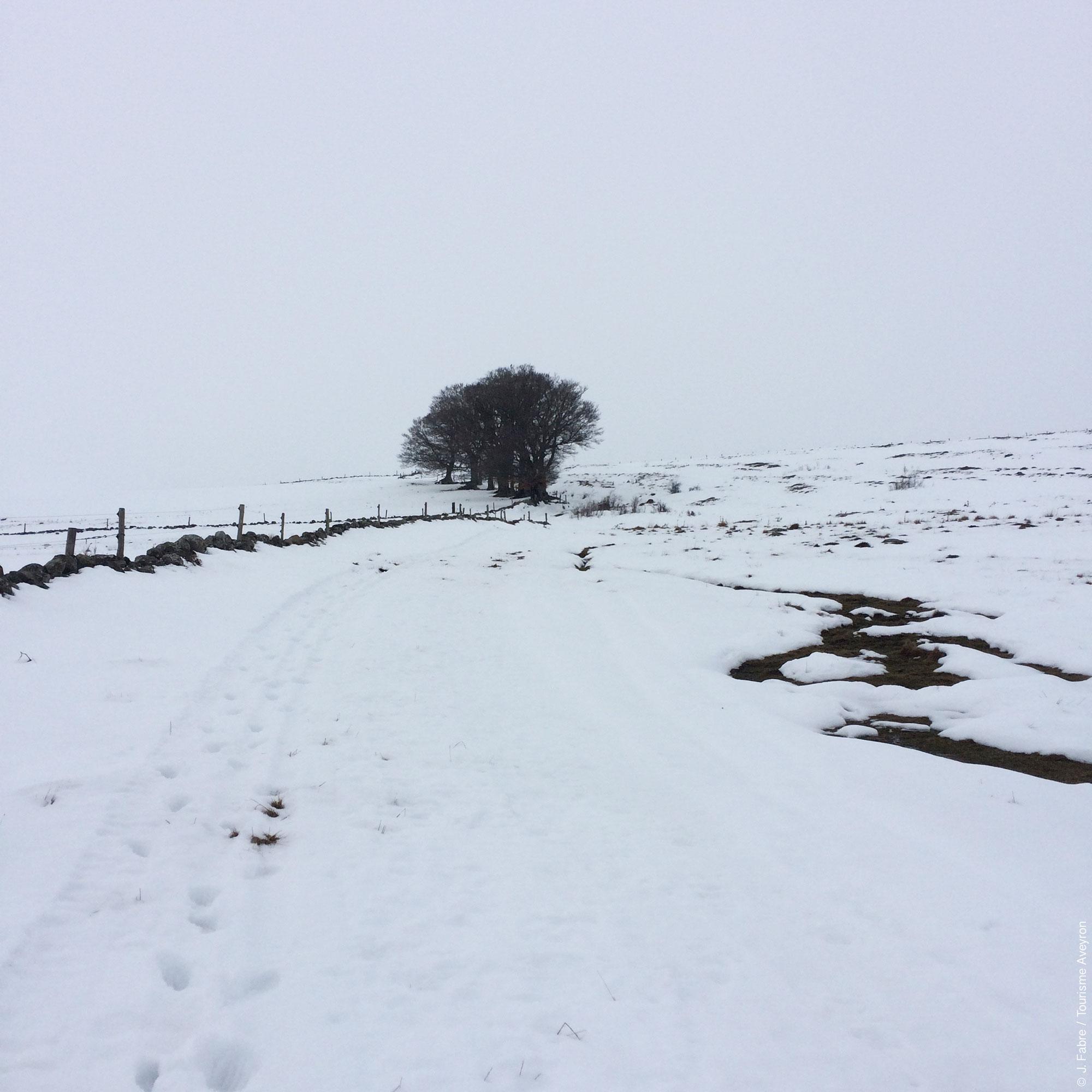 Aubrac sous la neige © J. Fabre - Tourisme Aveyron