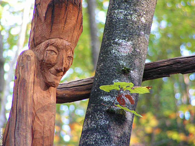 Taussac, la forêt magique © OT Carladez