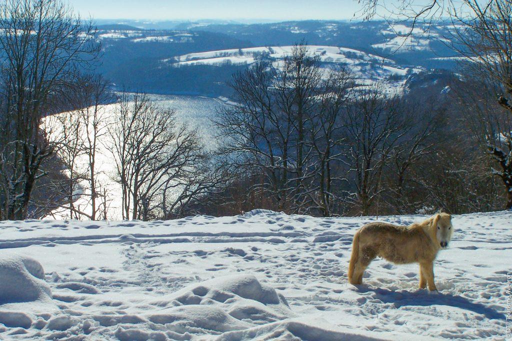 Lac de Sarrans enneigé, Carladez, Aveyron