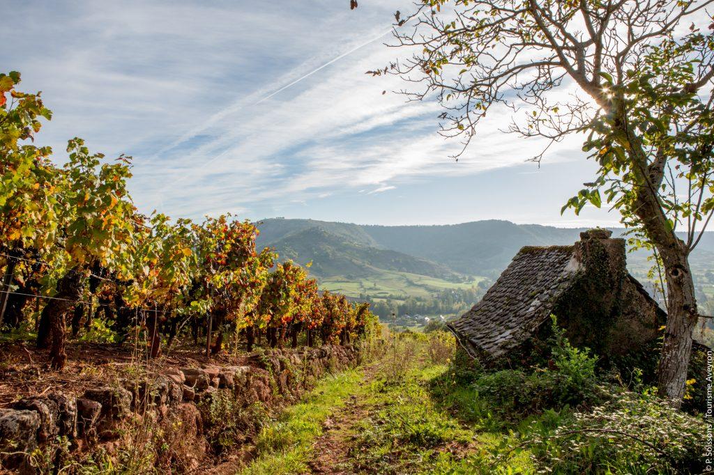 Vignes et petit patrimoine du vallon de Marcillac, Aveyron © P. Soissons