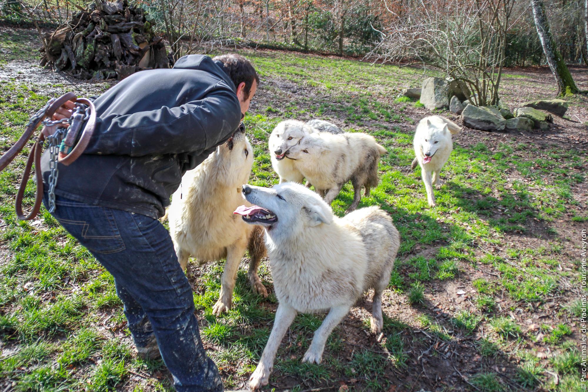 Loups du parc animalier de Pradinas
