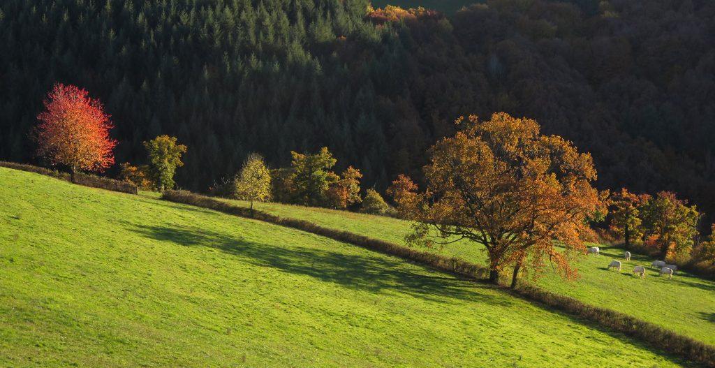 Les Balades à l'automne, Aveyron